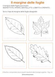 Risultati immagini per la foglia per scuola primaria