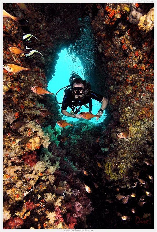 Scuba Diving With Go Dive Lanta Ko Lanta Krabi Thailand Diving Thailand Scuba Diving Photography Scuba Diving Thailand
