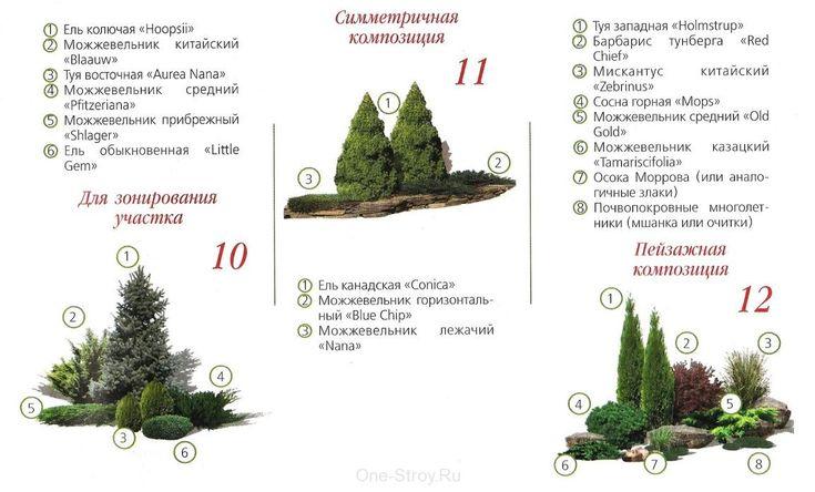 композиции с можжевельником фото схема: 2 тыс изображений найдено в Яндекс.Картинках