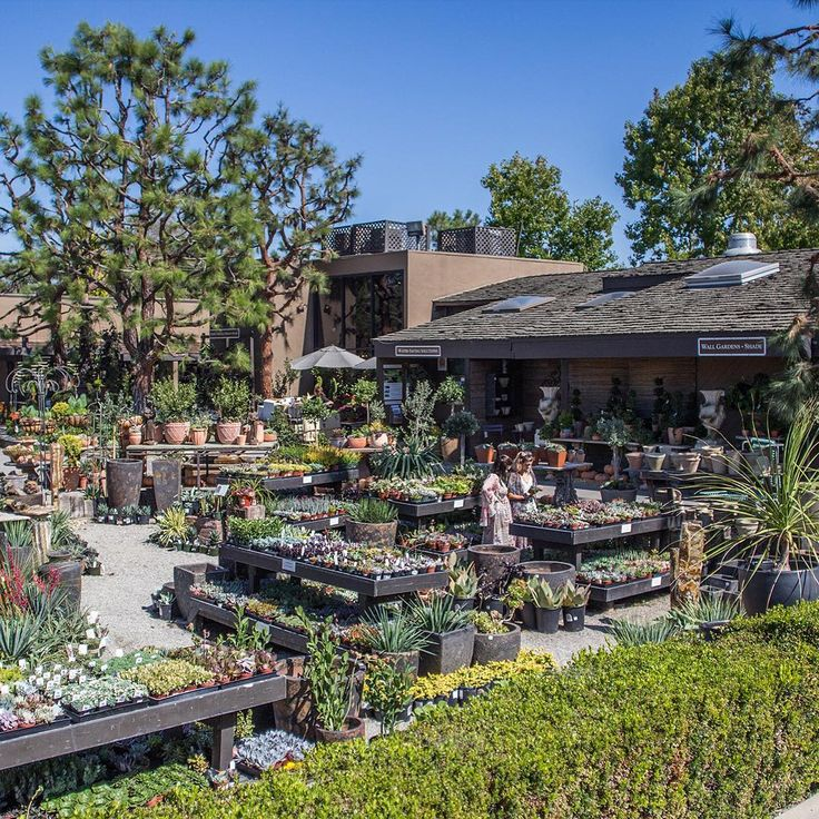 It's a beautiful day in the neighborhood... #rogersgardens #bringingbeautyintoyourhomeandgarden #californianursery #gardens #gardening #succulents #succulentlove #wander #wanderlust #instagood #love #beauty #life #nature