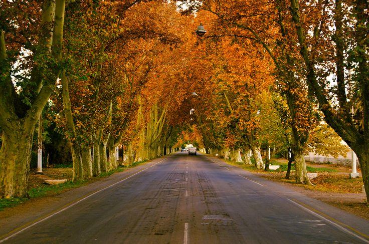 Otoño en San Rafael, Mendoza