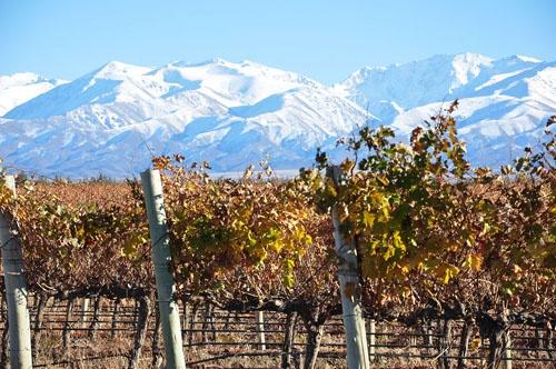 Ruta del vino en Argentina: San Juan