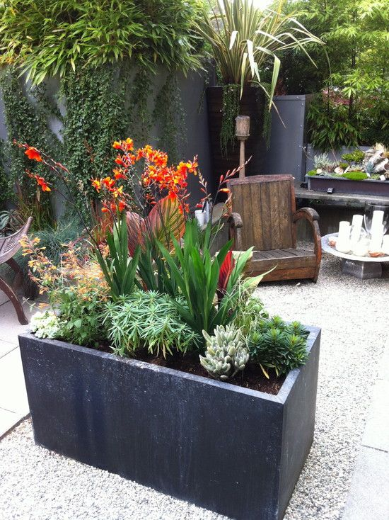 Modern Plants Design, Pictures, Remodel, Decor and Ideas - page 9