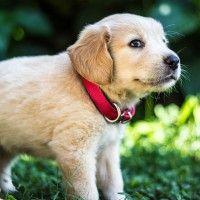 #dogalize Enfermedades Caninas: Alergias Cutaneas Síntomas #dogs #cats #pets
