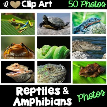 Reptiles and Amphibians Photos for Commercial Use
