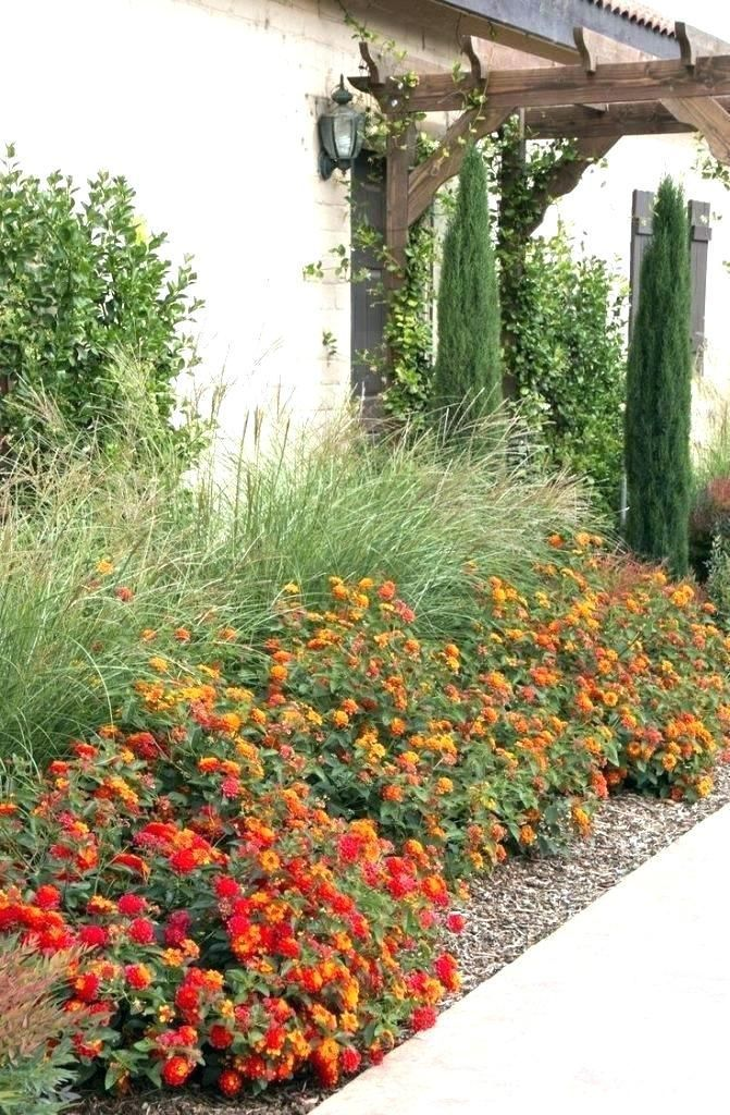 Texas Landscaping Ideas For Front Yard Landscaping Ideas For Front Yard North La In 2020 Xeriscape Front Yard Front Yard Garden Yard Landscaping