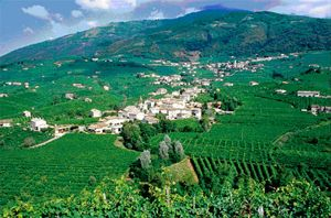 the foothills of the Alps of Veneto toward the course of the River Piave, where il Follo prosecco treviso is grown
