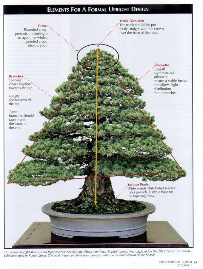 181 besten bonsai gestaltung pflege bilder auf pinterest bonsai g rtnern und pflanzen. Black Bedroom Furniture Sets. Home Design Ideas