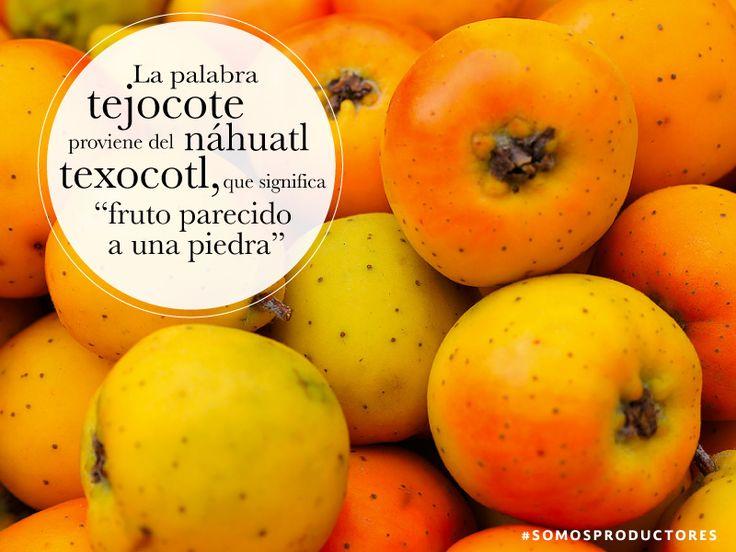 La palabra tejocote proviene del n huatl texocotl que for De que lengua proviene la palabra jardin