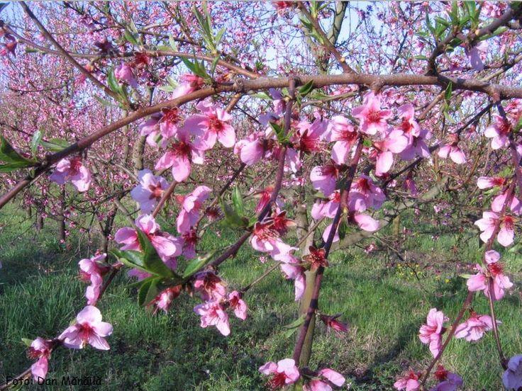 Tudor Gheorghe - Se bucura pomii de floare