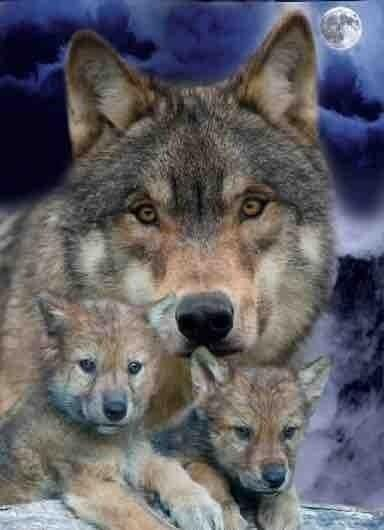 A mother's protection and love never waivers..