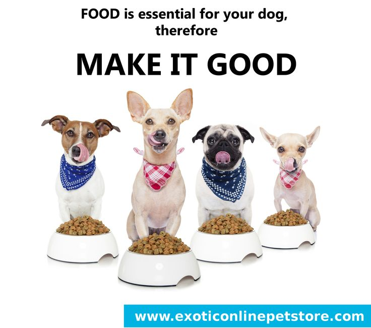 """""""FOOD is essential for your dog, therefore MAKE IT GOOD."""" #dogfood #pug #dog #essential http://www.exoticonlinepetstore.com/"""