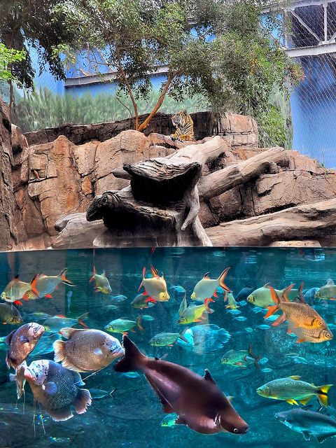 Denver Aquarium in Denver, Colorado is on our list of fun things  to do  #microcation