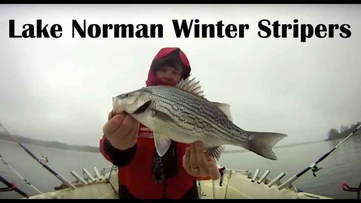 Lake Norman Striper Trolling - Fishing for Striper on Lake Norman - Lake Norman Striper Tips
