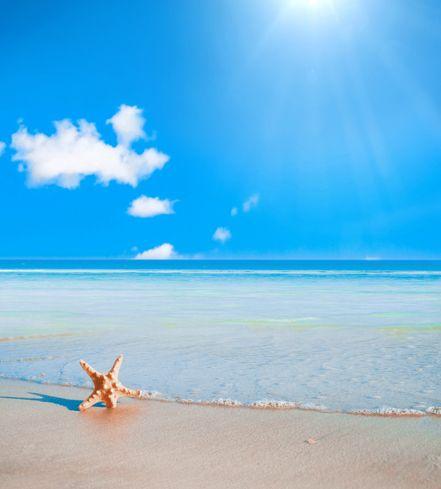 $23.90 (Buy here: https://alitems.com/g/1e8d114494ebda23ff8b16525dc3e8/?i=5&ulp=https%3A%2F%2Fwww.aliexpress.com%2Fitem%2F300-600cm-10ft-20ft-vintage-photography-backdrops-Beach-Starfish-Blue-Sky-photography-backdrops%2F32525171211.html ) 300*600cm(10ft*20ft) vintage photography backdrops Beach Starfish Blue Sky photography backdrops for just $23.90