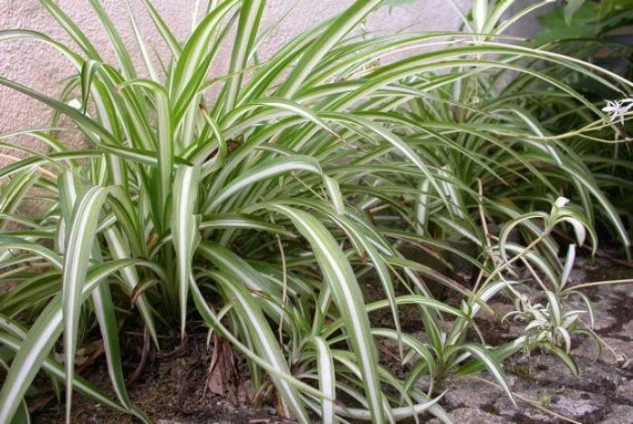 Cinta_plantas que purifican tu casa