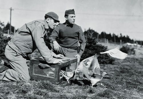 Men of the 21st Signal Loft release pigeons in March 1943 (National Archives)