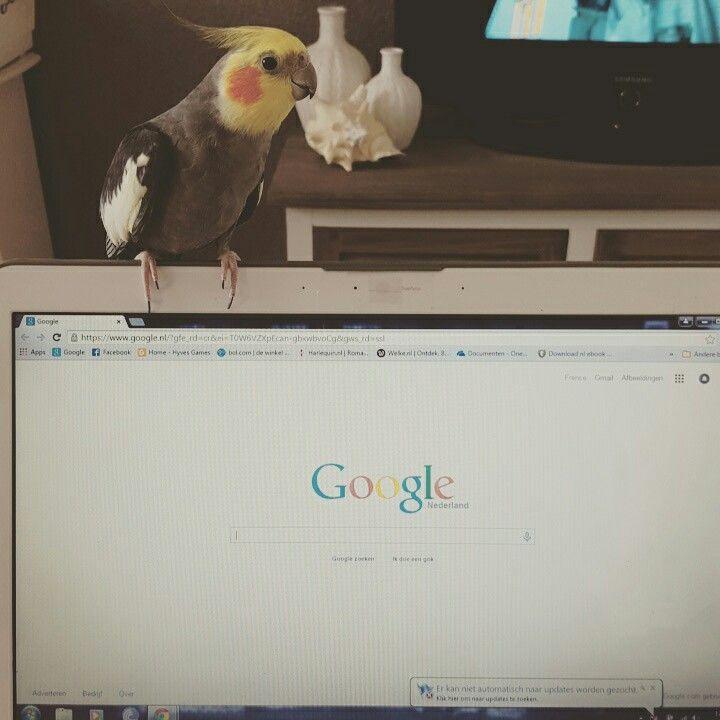 Google bird♡ ;)
