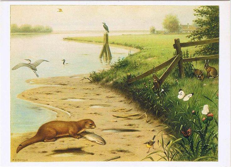 Schoolbord, oever, natuur, otter