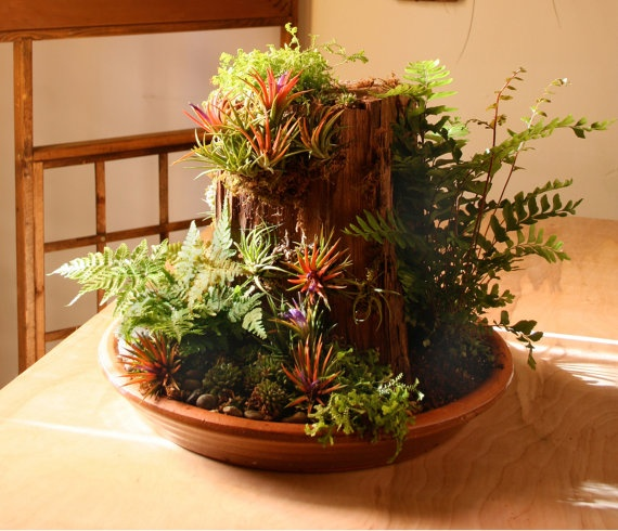The 50 Best Diy Miniature Fairy Garden Ideas In 2017: 368 Best Images About Ferns, Moss, And Ivy On Pinterest