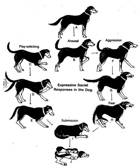 How to Read Your Dog's Body Language: http://positivemed.com/2013/11/06/read-dogs-body-language/