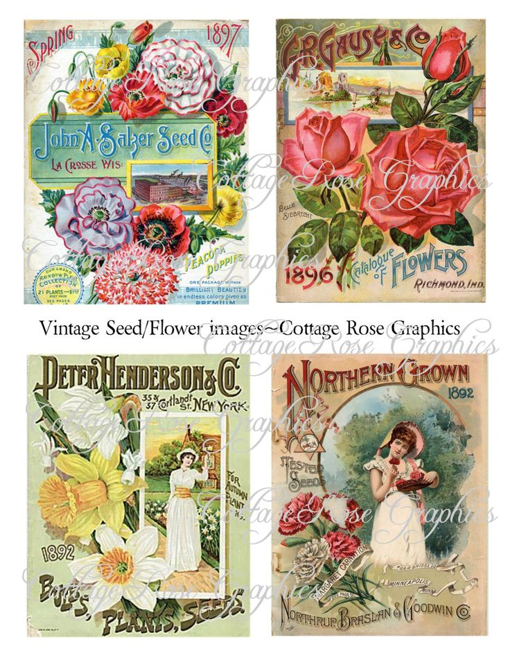 Vintage Seed or Flower Catalog Large digital download collage ATC ACEO gift tags ECS buy 3 get one free Set of 4 images by CottageRoseGraphics on Etsy https://www.etsy.com/listing/120570248/vintage-seed-or-flower-catalog-large