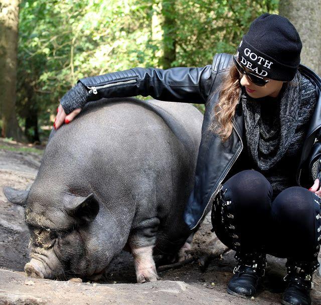 Wildpark Schwarze Berge  Kuscheln mit den Hängebauchschweinen #schweineliebe #schweine