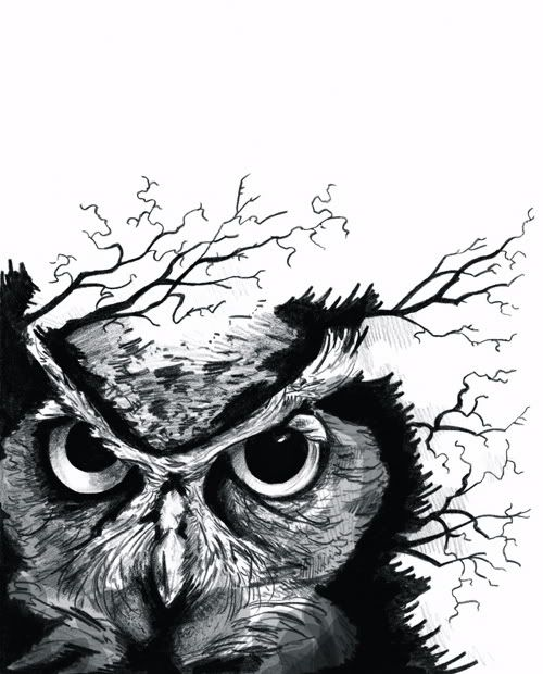 1000 images about owl tattoos on pinterest owl designs for Owl beak drawing