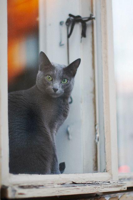 The cat in the window by Arkku, via Flickr