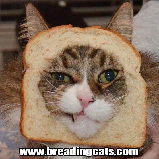 Cat In Bread Box Beauteous 21 Best Cat Breading Images On Pinterest  Breads Funny Cats And Review