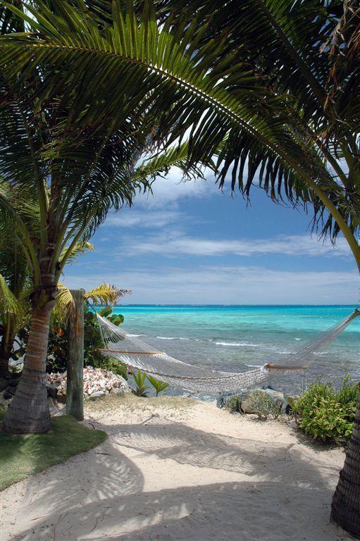 Coin Lecture sur un hamac bordé de palmier devant l'Océan...à réserver pour les Lectures Torrides...