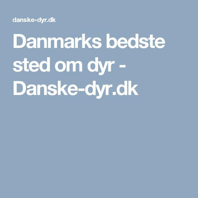 Danmarks bedste sted om dyr - Danske-dyr.dk