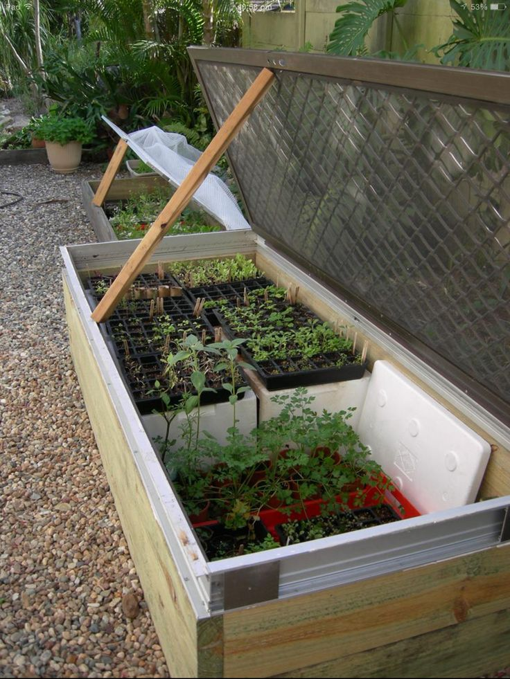 1000 Images About Out Get Out Rats Possums On Pinterest Gardens Raised Beds And Veg Garden