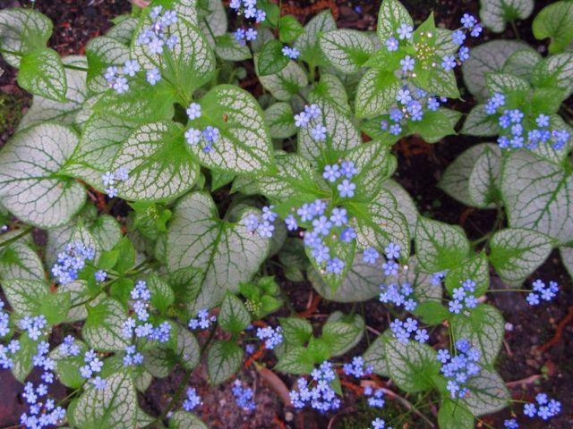 Welche Blumen Im Schatten Garten Pflanzen ? Bitmoon.info Welche Blumen Im Schatten Garten Pflanzen
