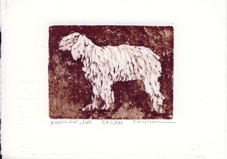 Typical Hungarian dog - Komondor