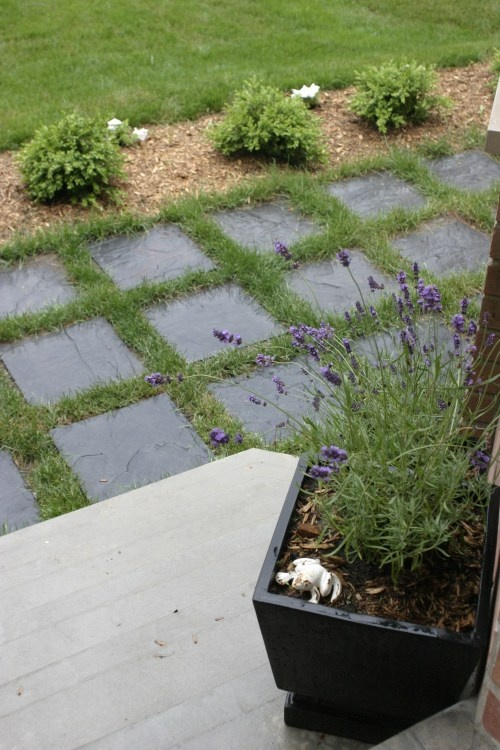 front walkway, thyme instead of grass