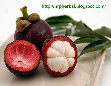 HRP Herbal : Terapi Herbal Menggunakan Air Rebusan Kulit Manggi...