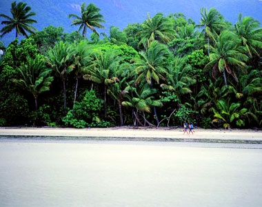 The Daintree Rainforest is the largest area of tropical rainforest on the Australian continent located on the north east coast of Queensland, it grows right to the edge of the sea creating rare unusual stunning coastal scenery where tropical rainforest extends to white sandy beaches with fringing coral reefs just offshore. The forest also contains absolutely spectacular waterfalls, rivers in gorges, rugged mountain peaks and supreme views of undisturbed forests and valleys.