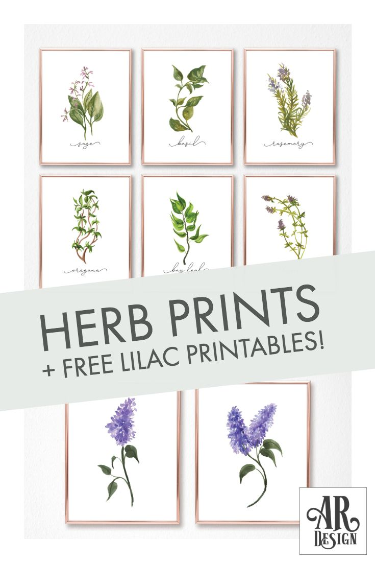 Design Herb Gallery Wall Set Free Liliac Print Set Gallery