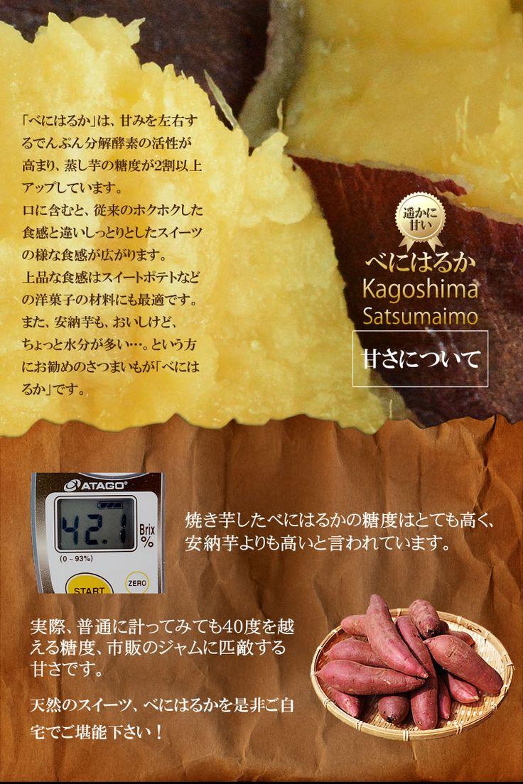 【楽天市場】【送料無料】べにはるか2kg Lサイズ 紅はるか 鹿児島県産 特産品 安納芋より美味しいと評判のさつまいも!しっとりした食感はまるでスイーツ☆:プロジェクト鹿児島