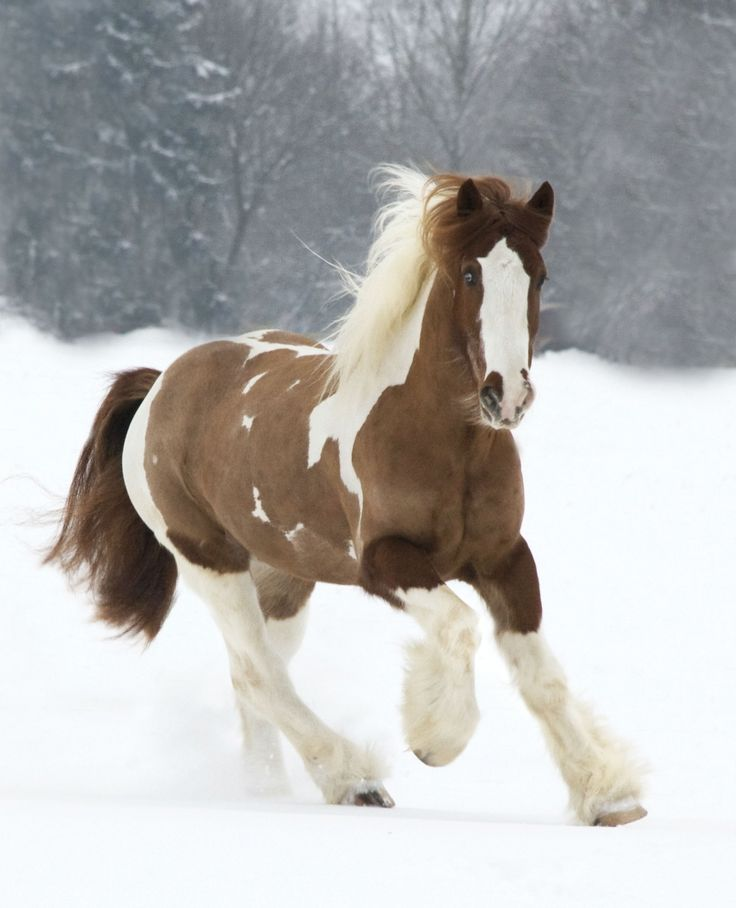 15breathtakingly beautiful horses