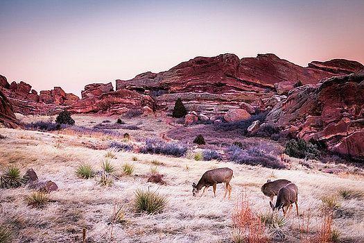 Art Calapatia - Deer Feeding at Sunset