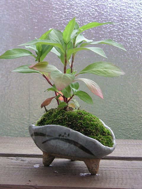 Tiny pot by ariari, via Flickr