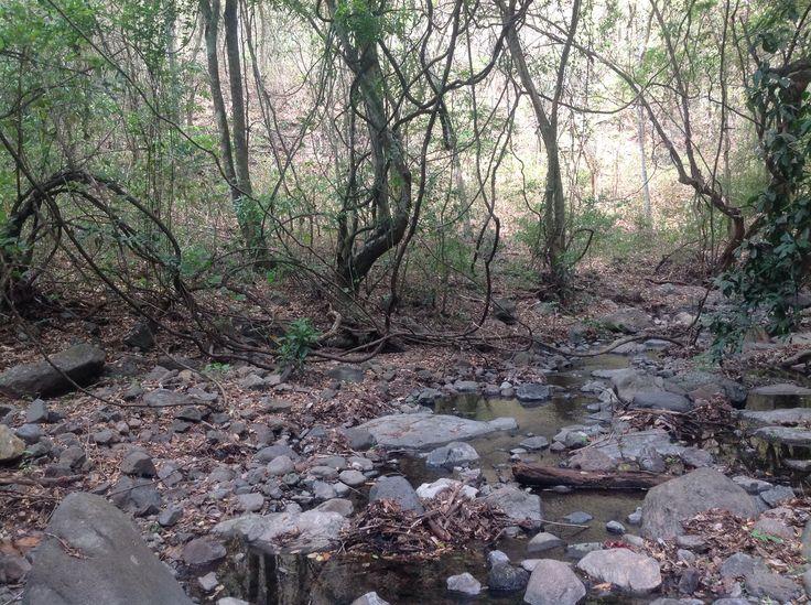 Bosque de Cinquera Cabañas, El Salvador
