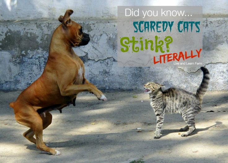 Scaredy Cats Stink - Live and Learn Farm