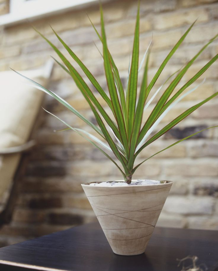 10 houseplants that can survive even the darkest corner low light