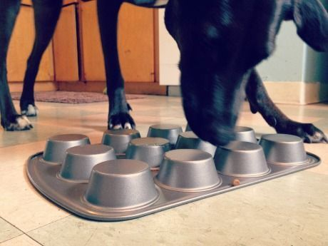 Six do-it-yourself food puzzles that will help keep your dog mentally and physically active.