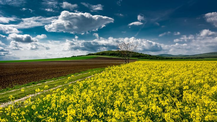 spring on the meadow - null