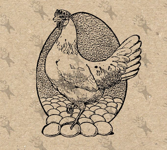 Vintage image Hen Chicken Fresh Eggs Instant Download Digital printable retro picture clipart graphic fabric transfer burlap print HQ 300dpi by UnoPrint on Etsy