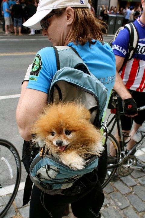 Snapped this pic at a bike race in Manayunk! #Philadelphia #Manayunk #Biking #BikeRace #dog #puppy